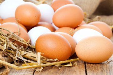 فروش تخم مرغ ترکیه